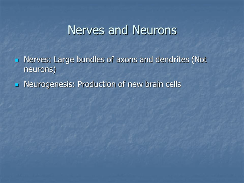 Nerves and Neurons Nerves: Large bundles of axons and dendrites (Not neurons) Nerves: Large bundles of axons and dendrites (Not neurons) Neurogenesis: Production of new brain cells Neurogenesis: Production of new brain cells