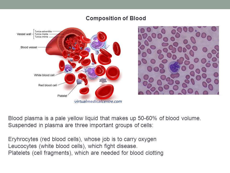 Composition of Blood Blood plasma is a pale yellow liquid that makes up 50-60% of blood volume. Suspended in plasma are three important groups of cell
