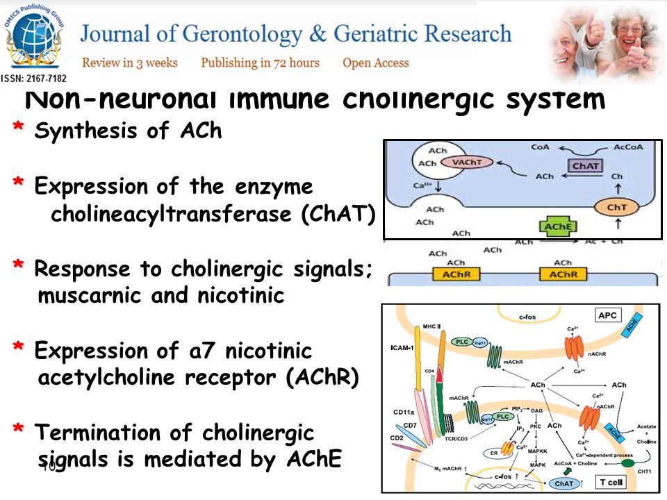 10 Non-neuronal immune cholinergic system * * Synthesis of ACh * * Expression of the enzyme cholineacyltransferase (ChAT) * * Response to cholinergic signals; muscarnic and nicotinic * * Expression of a7 nicotinic acetylcholine receptor (AChR) * * Termination of cholinergic signals is mediated by AChE