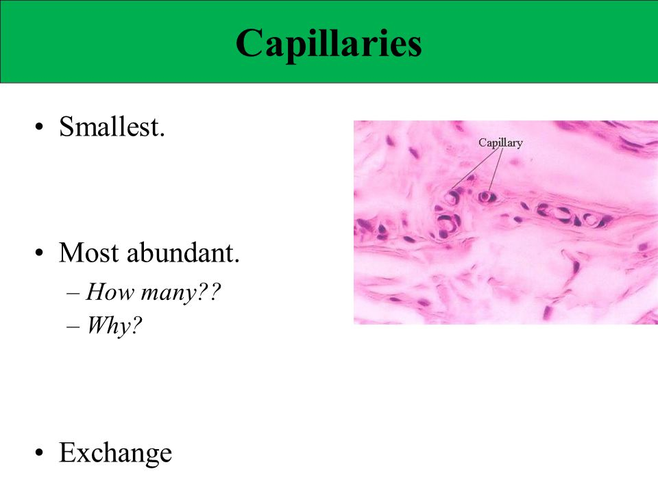 Capillary Reabsorption If capillary HP << capillary OP, – What kind of fluid movement will occur.
