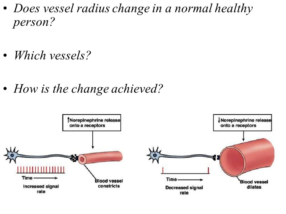 Does vessel radius change in a normal healthy person? Which vessels? How is the change achieved?