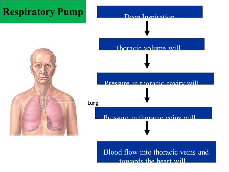 Respiratory Pump Deep Inspiration Thoracic volume will… Pressure in thoracic cavity will… Pressure in thoracic veins will… Blood flow into thoracic ve