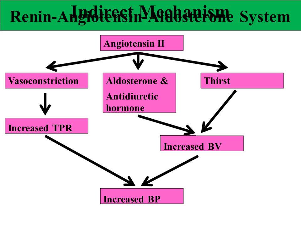 Indirect Mechanism VasoconstrictionAldosterone &Thirst Antidiuretic hormone Increased TPR Increased BV Increased BP Renin-Angiotensin-Aldosterone Syst
