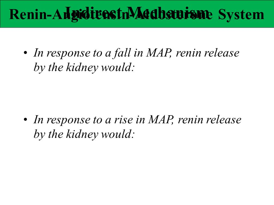 In response to a fall in MAP, renin release by the kidney would: In response to a rise in MAP, renin release by the kidney would: Indirect Mechanism R