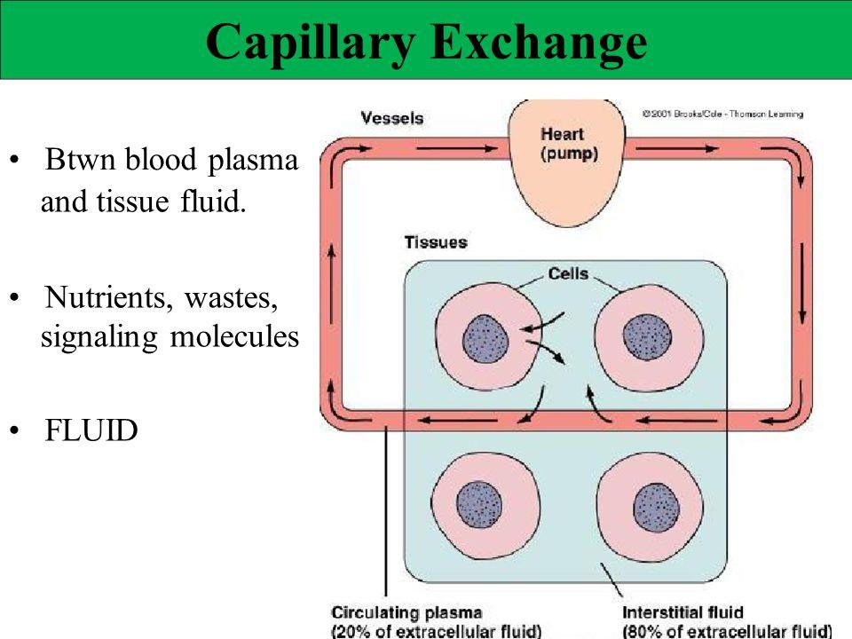 Capillary Exchange Btwn blood plasma and tissue fluid. Nutrients, wastes, signaling molecules FLUID