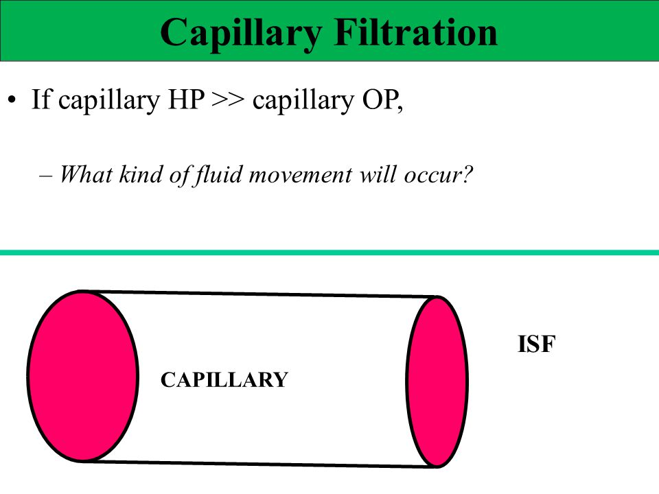 Capillary Filtration If capillary HP >> capillary OP, – What kind of fluid movement will occur? ISF CAPILLARY