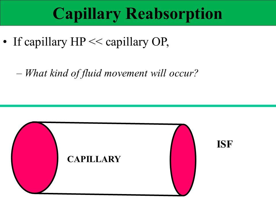 Capillary Reabsorption If capillary HP << capillary OP, – What kind of fluid movement will occur? ISF CAPILLARY