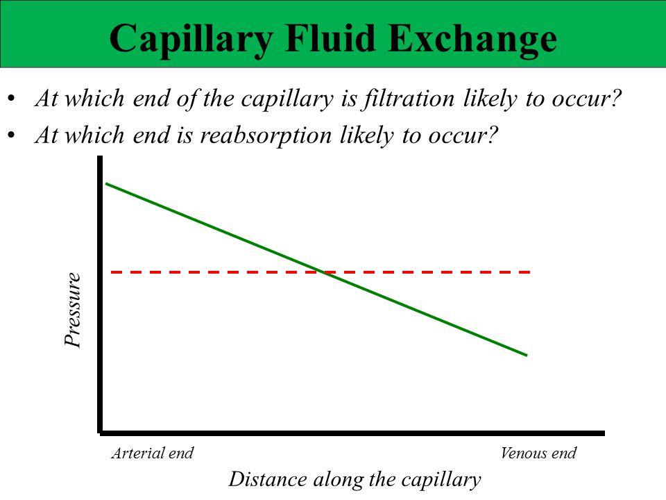 Pressure Capillary Fluid Exchange At which end of the capillary is filtration likely to occur? At which end is reabsorption likely to occur? Distance