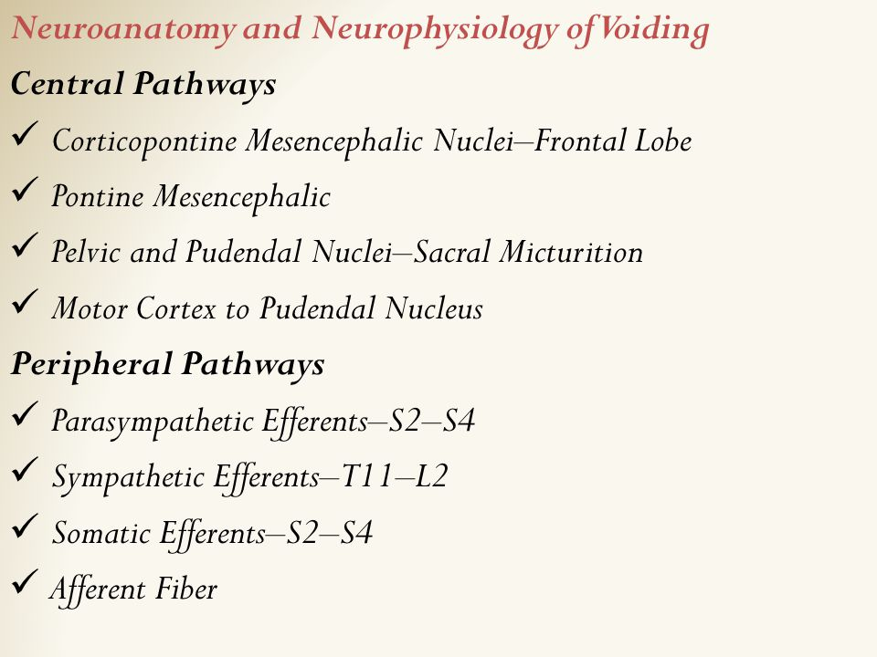 Neuroanatomy and Neurophysiology of Voiding Central Pathways Corticopontine Mesencephalic Nuclei–Frontal Lobe Pontine Mesencephalic Pelvic and Pudenda