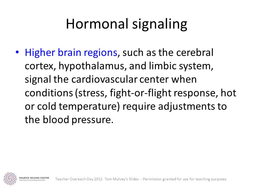 Hormonal signaling Higher brain regions, such as the cerebral cortex, hypothalamus, and limbic system, signal the cardiovascular center when conditions (stress, fight-or-flight response, hot or cold temperature) require adjustments to the blood pressure.