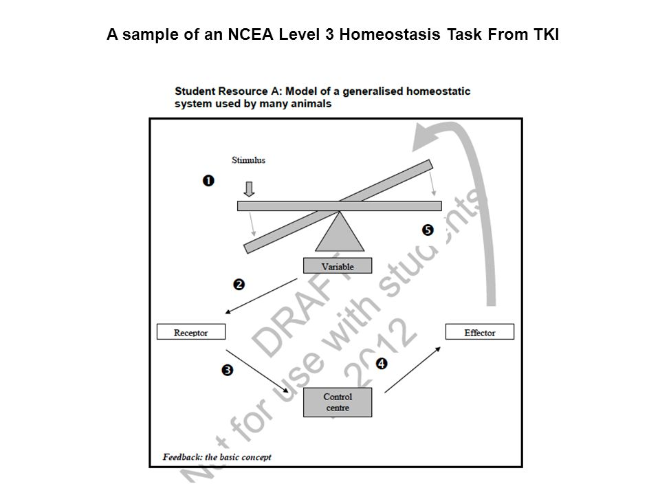 A sample of an NCEA Level 3 Homeostasis Task From TKI
