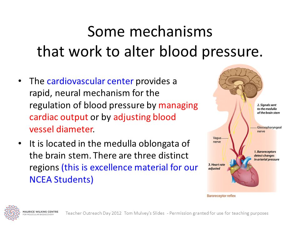 Some mechanisms that work to alter blood pressure.