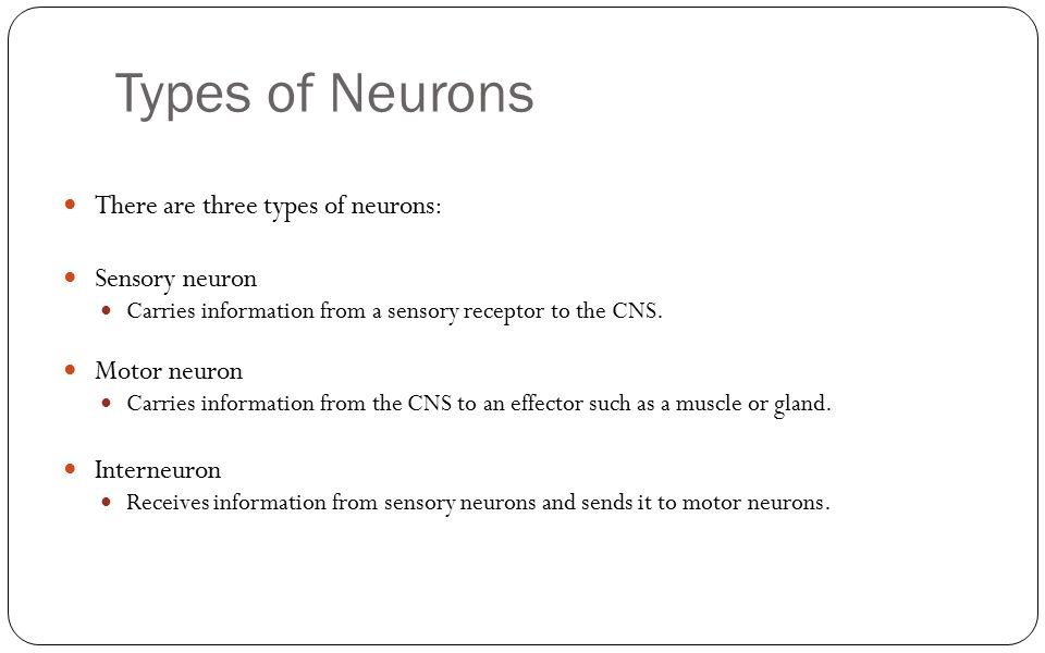 Types of Neurons There are three types of neurons: Sensory neuron Carries information from a sensory receptor to the CNS. Motor neuron Carries informa