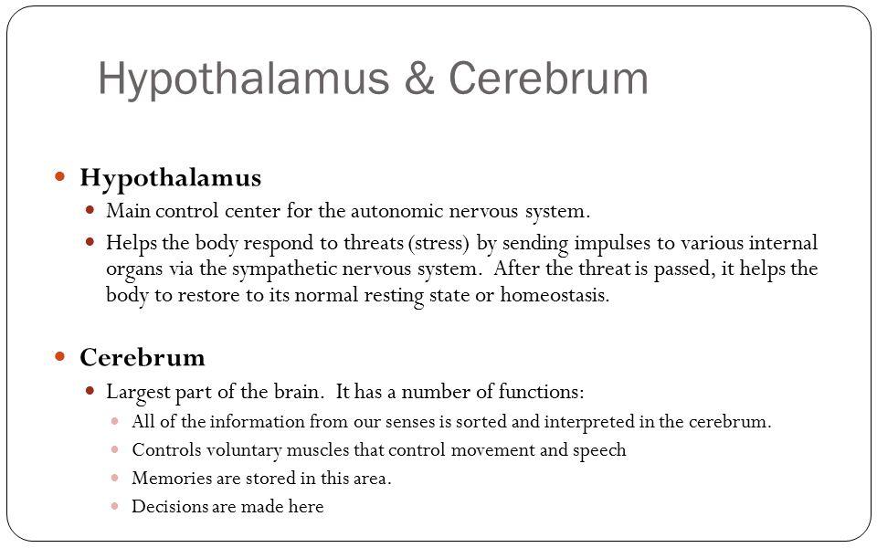 Hypothalamus & Cerebrum Hypothalamus Main control center for the autonomic nervous system. Helps the body respond to threats (stress) by sending impul