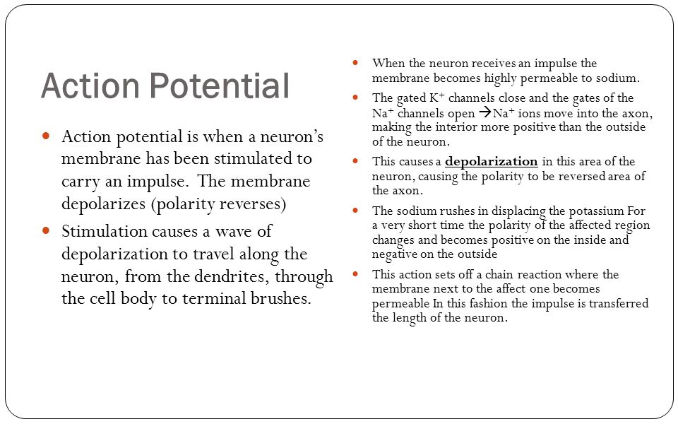 Action Potential Action potential is when a neuron's membrane has been stimulated to carry an impulse. The membrane depolarizes (polarity reverses) St