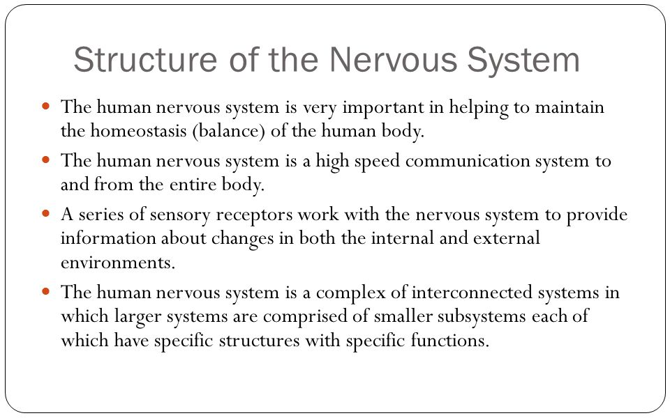 Structure of the Nervous System The human nervous system is very important in helping to maintain the homeostasis (balance) of the human body. The hum
