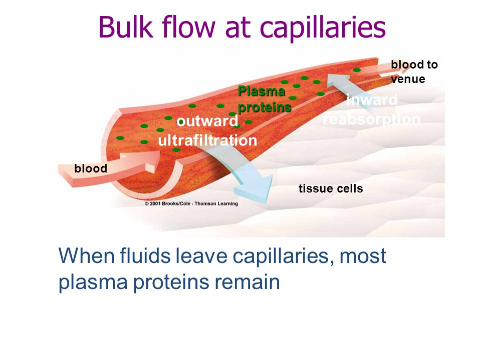 Bulk flow at capillaries When fluids leave capillaries, most plasma proteins remain Plasmaproteins blood to venue inward reabsorption tissue cells out