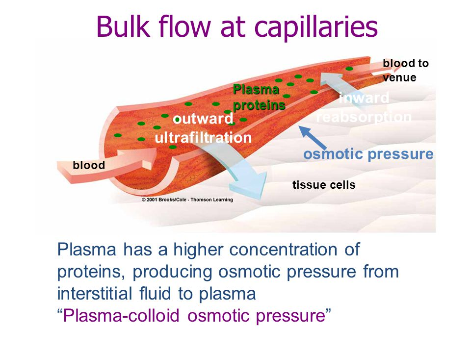 Bulk flow at capillaries Plasma has a higher concentration of proteins, producing osmotic pressure from interstitial fluid to plasma Plasma-colloid osmotic pressure osmotic pressure blood to venue inward reabsorption tissue cells outward ultrafiltration blood Plasmaproteins