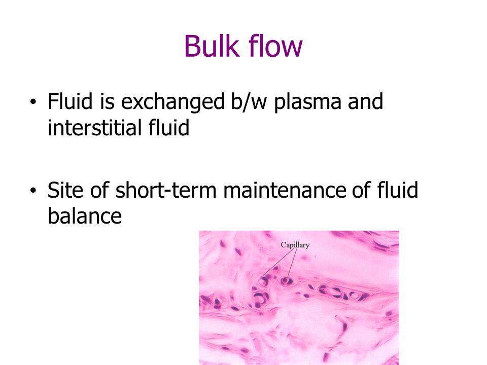 Bulk flow Fluid is exchanged b/w plasma and interstitial fluid Site of short-term maintenance of fluid balance