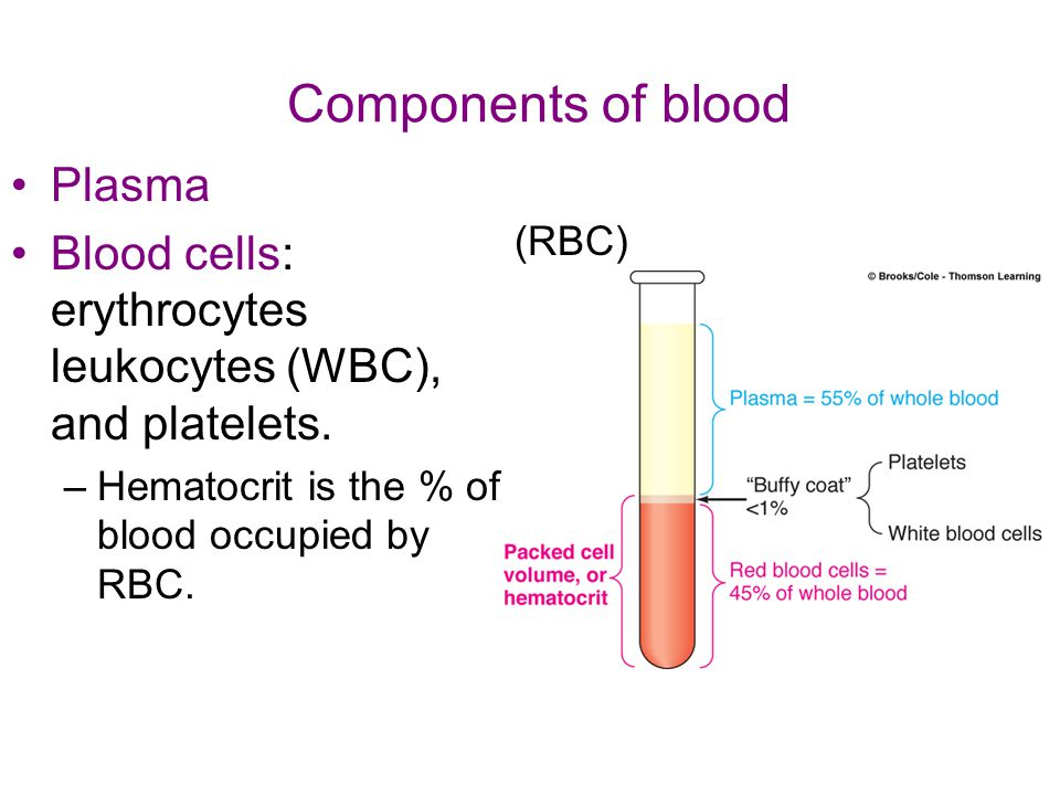 Components of blood Plasma Blood cells: erythrocytes leukocytes (WBC), and platelets. –Hematocrit is the % of blood occupied by RBC. (RBC)