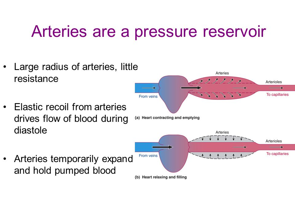 Arteries are a pressure reservoir Large radius of arteries, little resistance Elastic recoil from arteries drives flow of blood during diastole Arteries temporarily expand and hold pumped blood