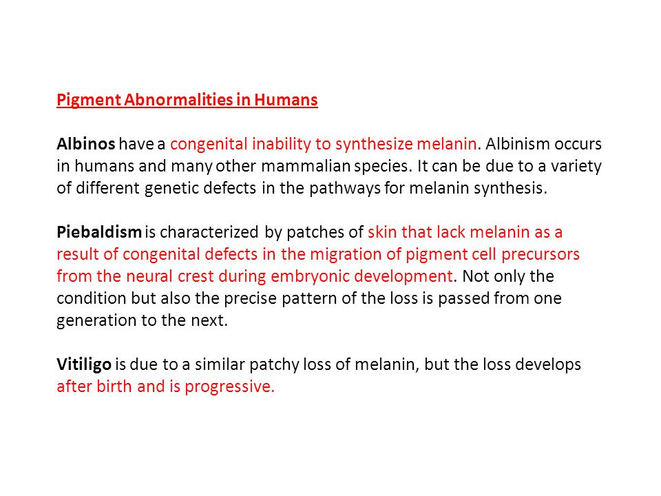 Pigment Abnormalities in Humans Albinos have a congenital inability to synthesize melanin.