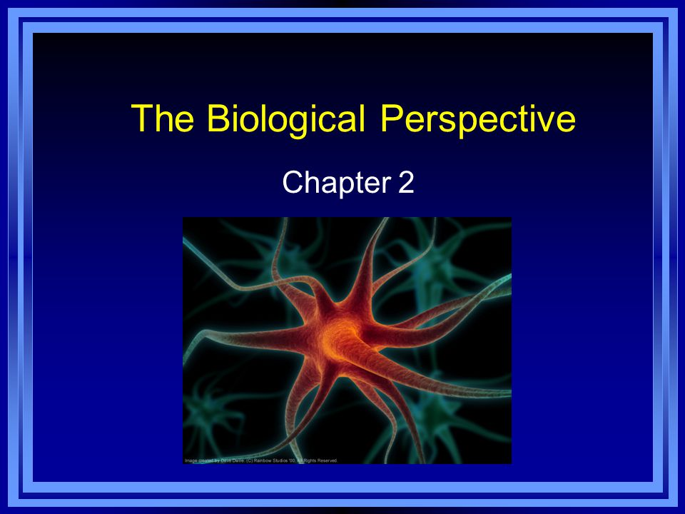 The Biological Perspective Chapter 2