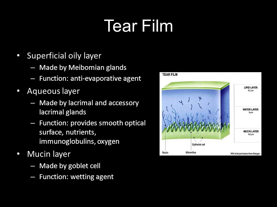 Tear Film Superficial oily layer – Made by Meibomian glands – Function: anti-evaporative agent Aqueous layer – Made by lacrimal and accessory lacrimal