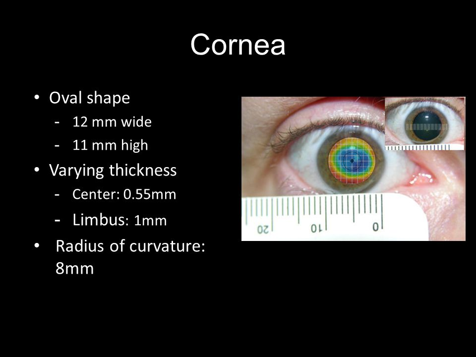 Cornea Oval shape -12 mm wide -11 mm high Varying thickness -Center: 0.55mm -Limbus : 1mm Radius of curvature: 8mm
