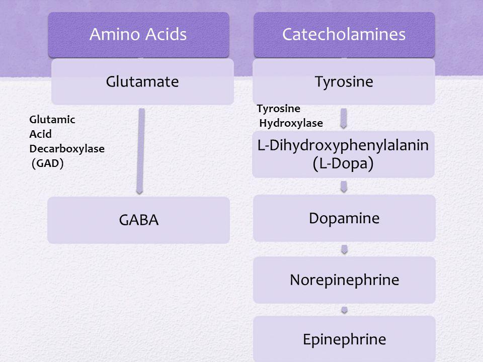 Amino Acids GlutamateGABA Catecholamines Tyrosine L-Dihydroxyphenylalanin (L-Dopa) DopamineNorepinephrineEpinephrine Glutamic Acid Decarboxylase (GAD)