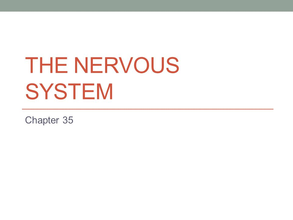 THE NERVOUS SYSTEM Chapter 35