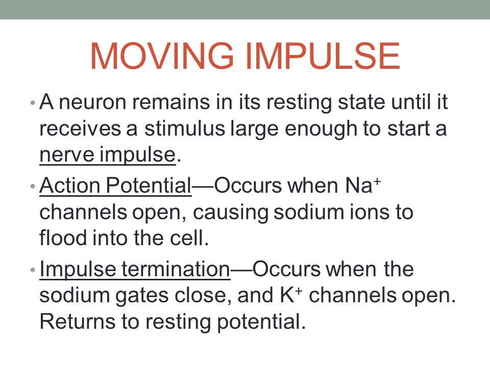 MOVING IMPULSE A neuron remains in its resting state until it receives a stimulus large enough to start a nerve impulse.