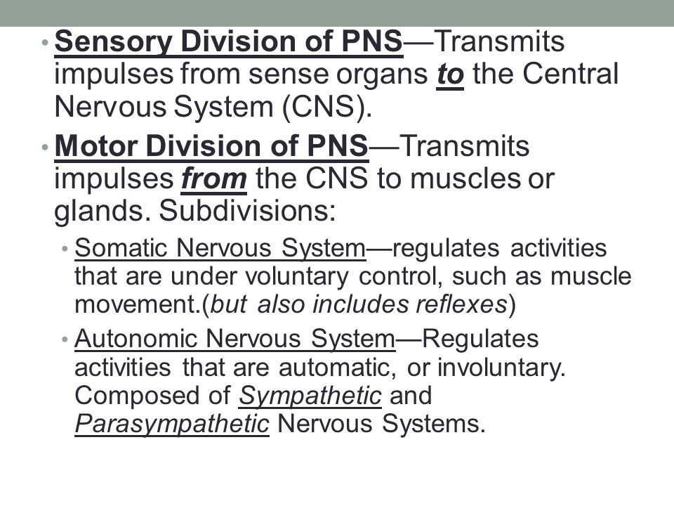 Sensory Division of PNS—Transmits impulses from sense organs to the Central Nervous System (CNS).