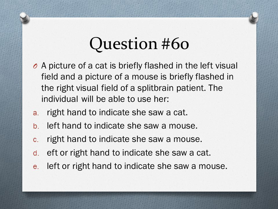 Question #60 O A picture of a cat is briefly flashed in the left visual field and a picture of a mouse is briefly flashed in the right visual field of a splitbrain patient.