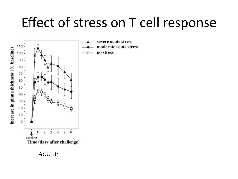 Effect of stress on T cell response ACUTE