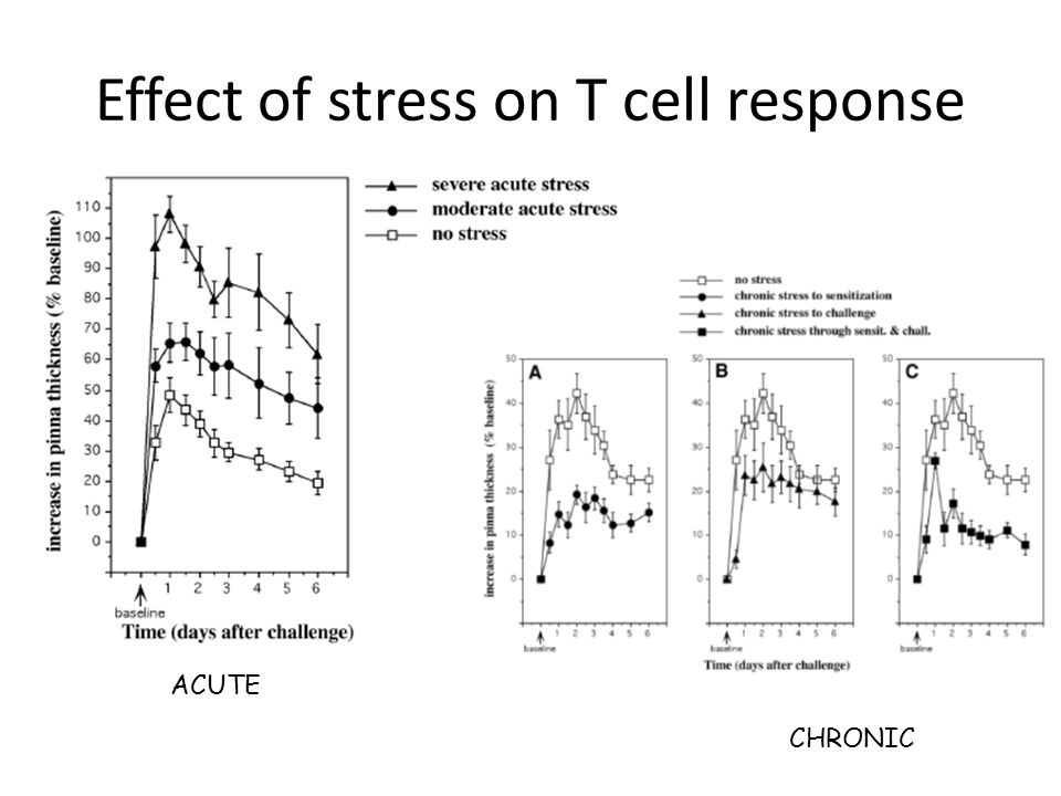 STRESS Sympathetic Nervous System (Epinephrine and Norepinephrine): – Increases inflammation—increases adhesion molecules from macrophages—allowing all cells to stick into tissues better – Increase inflammation—Th1 cells have receptors for Epinephrine and Norepinephrine Glucocorticoids: Acute – Enhances IFNγ action on Th1 Glucocorticoids: Chronic – Reduce numbers of lymphocytes (T>B), basophils, eosinophils, macrophages