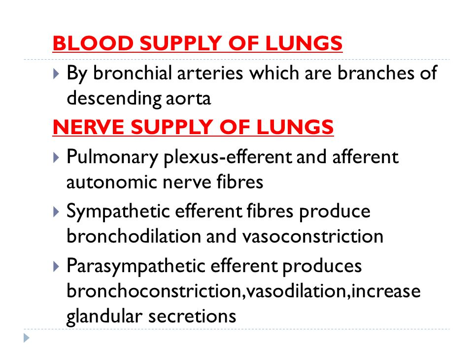 BLOOD SUPPLY OF LUNGS  By bronchial arteries which are branches of descending aorta NERVE SUPPLY OF LUNGS  Pulmonary plexus-efferent and afferent au