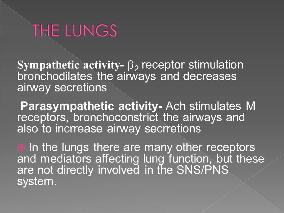 Sympathetic activity-  2 receptor stimulation bronchodilates the airways and decreases airway secretions Parasympathetic activity- Ach stimulates M r