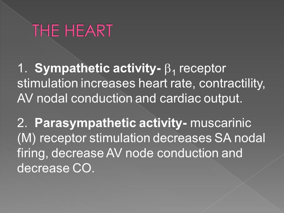 1. Sympathetic activity-  1 receptor stimulation increases heart rate, contractility, AV nodal conduction and cardiac output. 2. Parasympathetic acti