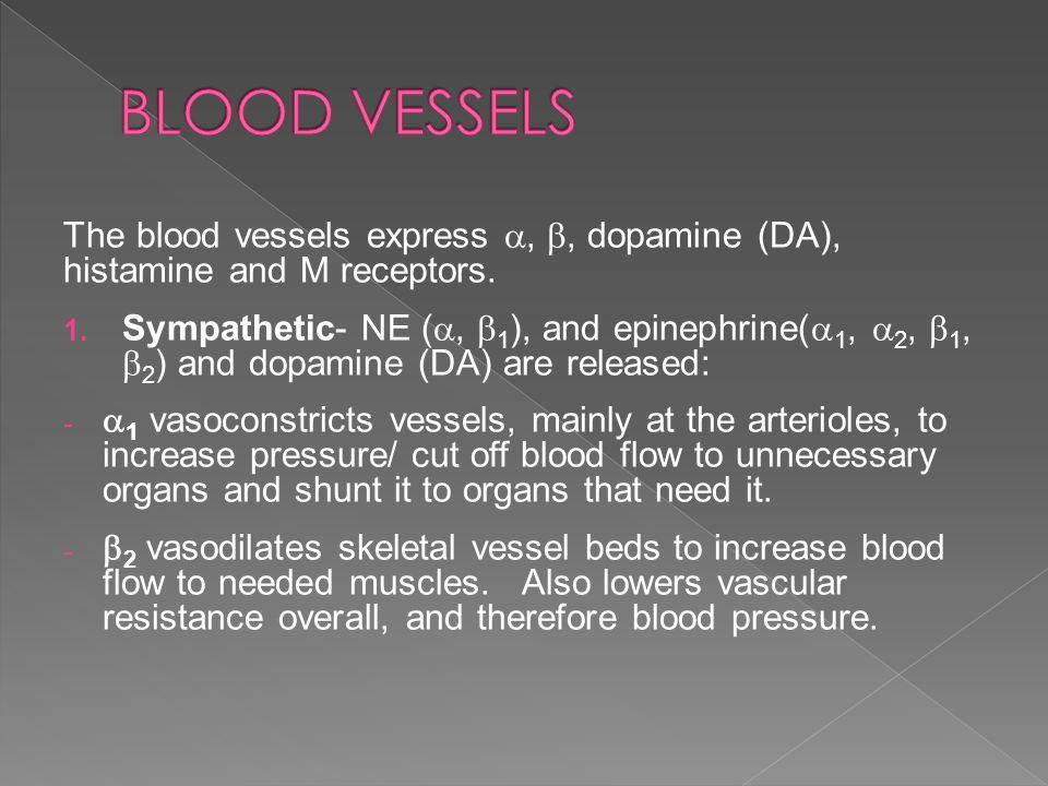 The blood vessels express , , dopamine (DA), histamine and M receptors.  Sympathetic- NE ( ,  1 ), and epinephrine(  1,  2,  1,  2 ) and dop