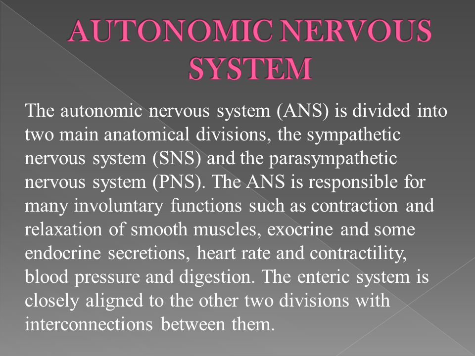 The autonomic nervous system (ANS) is divided into two main anatomical divisions, the sympathetic nervous system (SNS) and the parasympathetic nervous