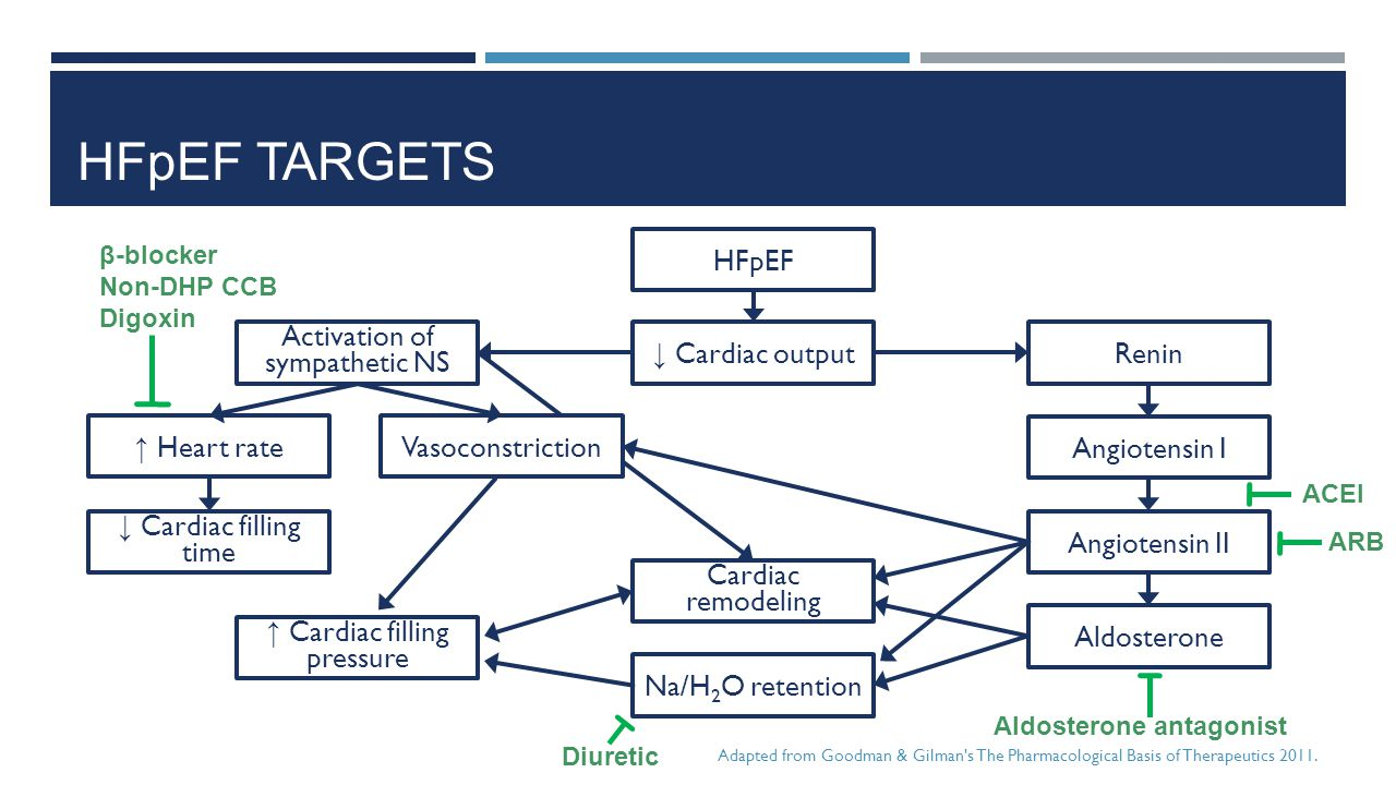 HFpEF TARGETS HFpEF ↓ Cardiac output Activation of sympathetic NS Renin Angiotensin I Vasoconstriction ↑ Heart rate Angiotensin II Aldosterone Na/H 2