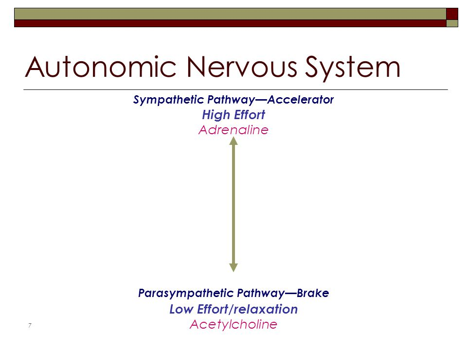 7 Autonomic Nervous System Parasympathetic Pathway—Brake Low Effort/relaxation Acetylcholine Sympathetic Pathway—Accelerator High Effort Adrenaline