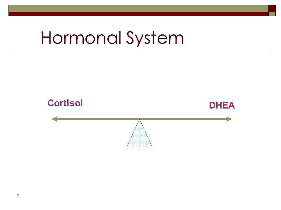 8 Hormonal System Cortisol DHEA