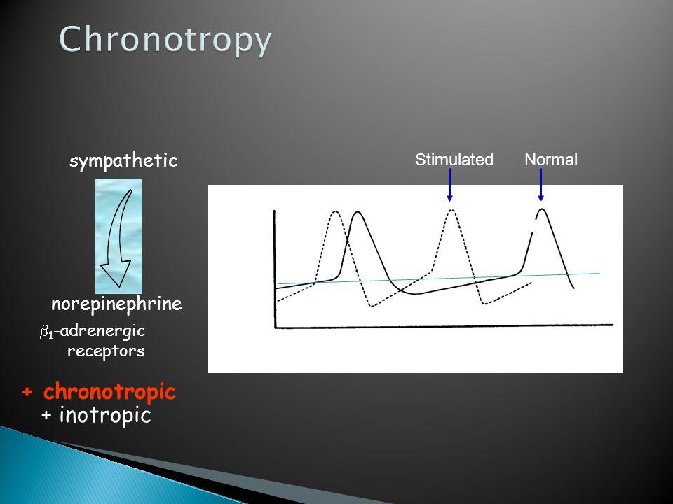  1 -adrenergic receptors sympathetic norepinephrine + chronotropic + inotropic NormalStimulated