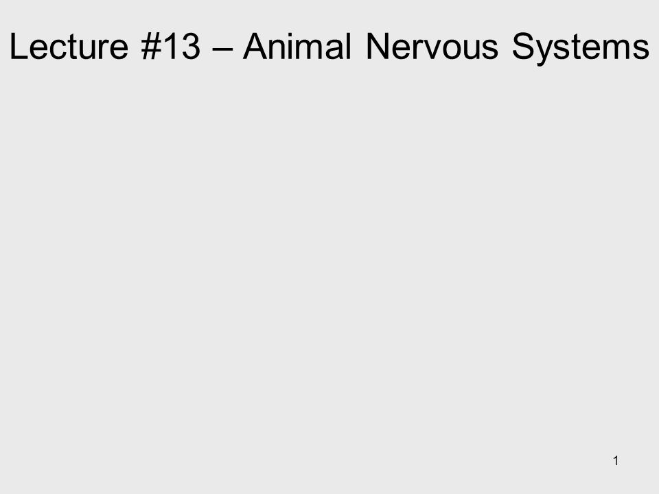 1 Lecture #13 – Animal Nervous Systems