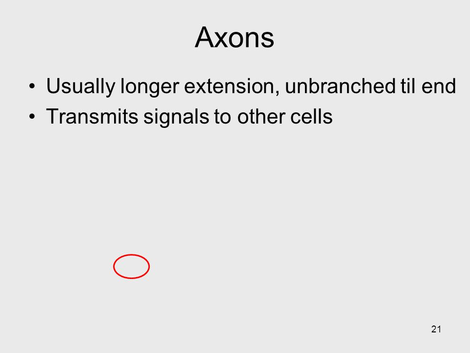 21 Axons Usually longer extension, unbranched til end Transmits signals to other cells