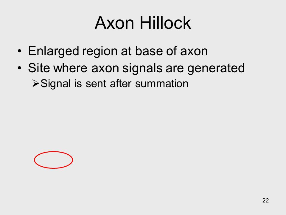 22 Axon Hillock Enlarged region at base of axon Site where axon signals are generated  Signal is sent after summation