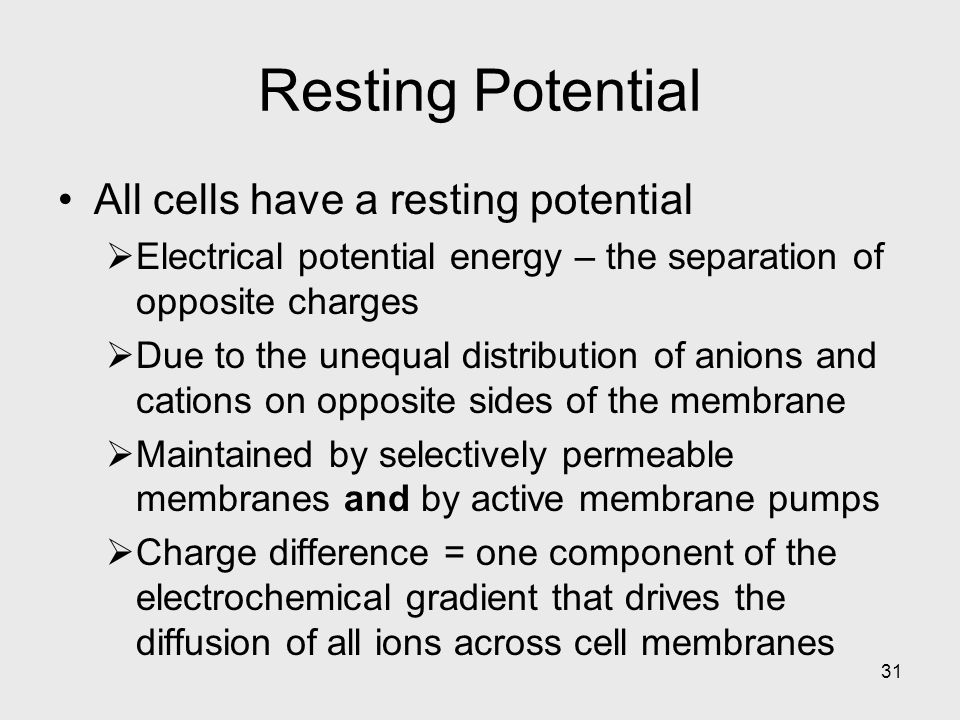 31 Resting Potential All cells have a resting potential  Electrical potential energy – the separation of opposite charges  Due to the unequal distribution of anions and cations on opposite sides of the membrane  Maintained by selectively permeable membranes and by active membrane pumps  Charge difference = one component of the electrochemical gradient that drives the diffusion of all ions across cell membranes