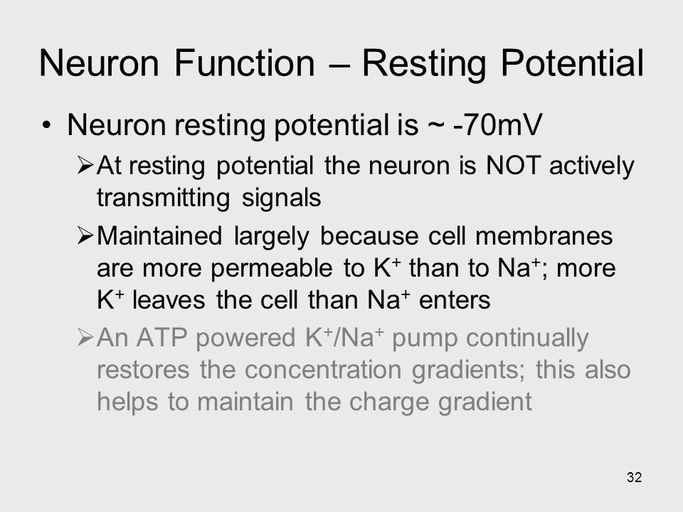 32 Neuron Function – Resting Potential Neuron resting potential is ~ -70mV  At resting potential the neuron is NOT actively transmitting signals  Maintained largely because cell membranes are more permeable to K + than to Na + ; more K + leaves the cell than Na + enters  An ATP powered K + /Na + pump continually restores the concentration gradients; this also helps to maintain the charge gradient